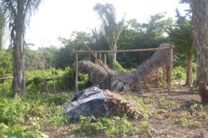 El rancho de Tito, tumbado por la empresa palmera
